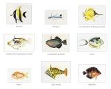 Fish of Hawaii